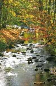 Wellnessurlaub Bayerischwer Wald Kurzurlaub