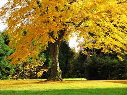 Wellness im Herbst in Tschechien erleben