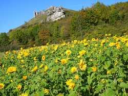 Wellnessurlaub Fränkische Schweiz online buchen